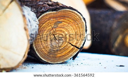 Logs of Wood - stock photo