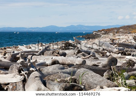 Logs on the Beach near Cattle Point on San Juan Island - stock photo