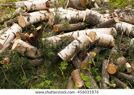 Logs on the grass. Chopped the trunk of a birch