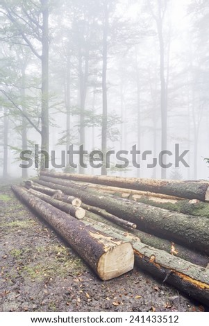 Logs trees in foggy beech forest - stock photo