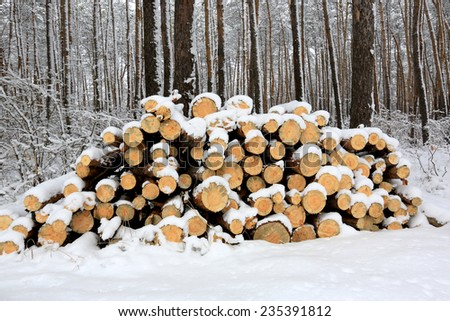 logs under snow in winter forest - stock photo