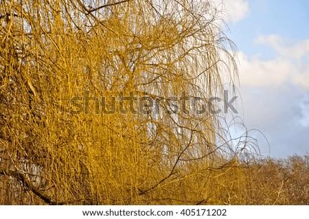 London park landscape, Trees on the horizon, on a London day. Bradford, London, England. - stock photo