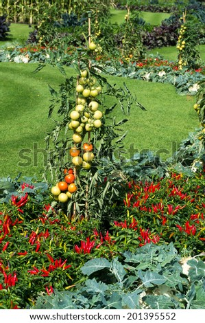 LONDON -SEPTEMBER 7 : Vegetable display outside the Palm House at Kew Gardens on September 7, 2013 - stock photo