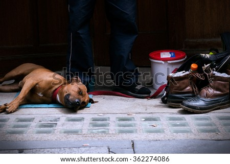 London, United Kingdom - June 14, 2012: A Dog sleeping beside it's owner during a one man protest.