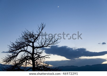 Lone bare tree silhouetted against evening sky with the moon - stock photo