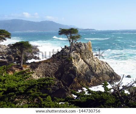 Lone Cypress - stock photo