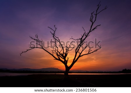 Lone Dead Tree in Sunset ,Thailand - stock photo