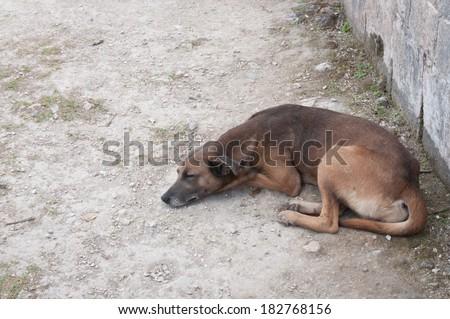 Lone dog - stock photo