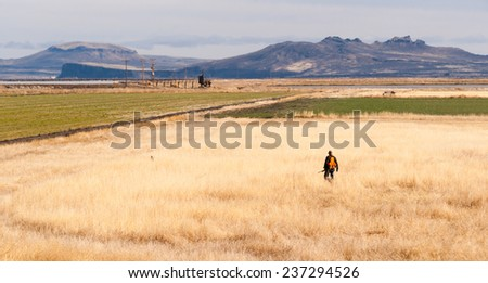 Lone Hunter Bird Dog Hunting Fowl Birds Tule Lake - stock photo
