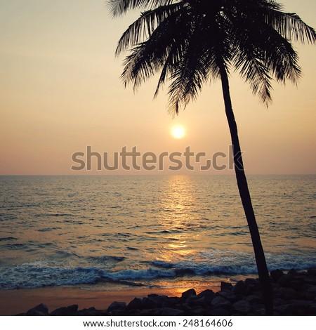 Lone palm tree on the sunset - retro filter. Sunset on the Beach in Varkala, Kerala, India. Peaceful ocean on sunset - retro filter. - stock photo