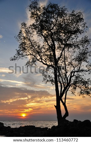 Lone, tall tree in silhouette by the sea during sunset