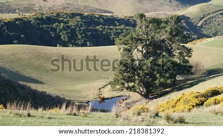 Lone Tree - stock photo