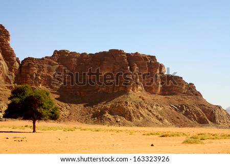 Lone Tree amid Desert Landscape with Rock Formations and Blue Sky, Wadi Rum, Jordan - stock photo