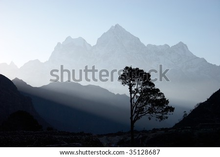 Lone tree at sunrise, Himalayas, Nepal - stock photo