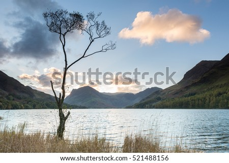 Lone Tree, Buttermere in the UK Lake District