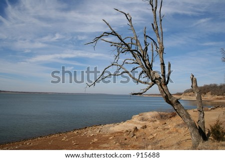 Lone Tree by the Lake