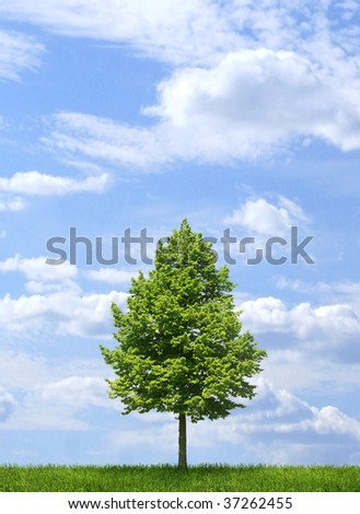 Lone tree growing on green grass, with blue sky and white clouds background