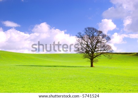 Lone tree in green meadow with blue sky and fluffy white clouds. - stock photo