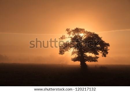 Lone tree in mist at dawn - stock photo
