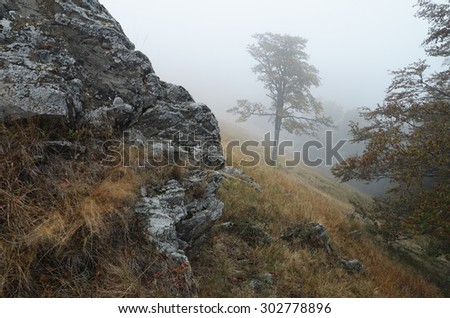Lone tree in the fog. Autumn landscape in the mountains with rocks and woods. It's a nasty day. Carpathians, Ukraine, Europe - stock photo