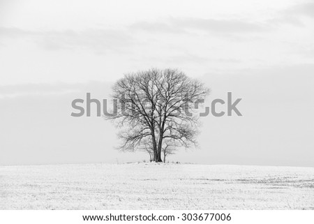 Lone Tree in Winter Landscape - Black and White - stock photo