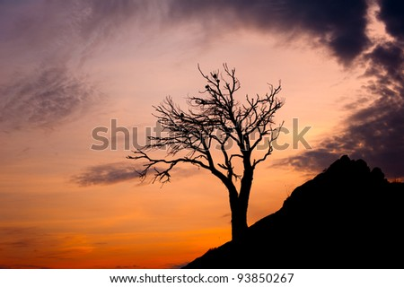 lone tree on a cliff at night