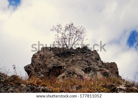 lone tree on a hill - stock photo