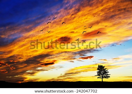 Lone tree on the mountain - stock photo
