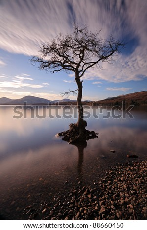 Lone tree partially submerged on Loch Lomond.