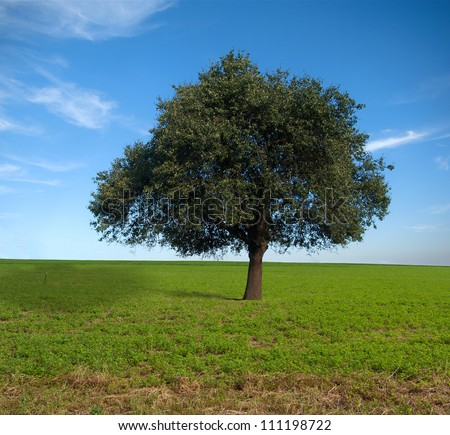 Lone tree, pear field background beautiful sky - stock photo
