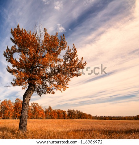 Lone Tree with an Autumn Sky - stock photo