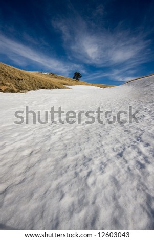Lone Tree with snow - stock photo