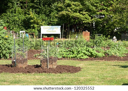 Lone volunteer works in the community garden - stock photo