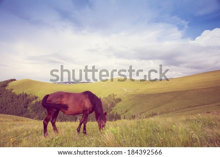 lone wild horse grazing on a green mountain meadow in the mountains against the blue sky with clouds and sunlight - stock photo