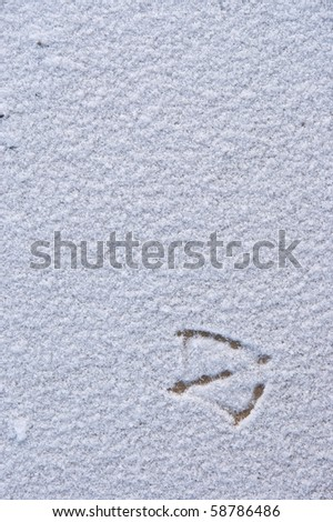 loneliness bird footprints on the snow background