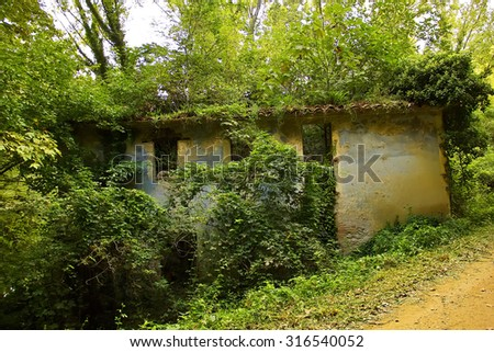 Lonely abandoned house covered in vegetation (Spain) - stock photo