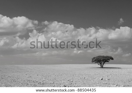 Lonely acacia tree in desert on the cloudy sky background - stock photo