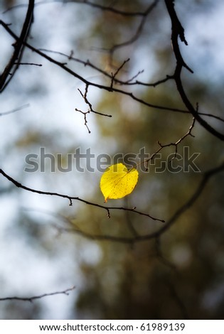 lonely aspen autumn leaf - stock photo