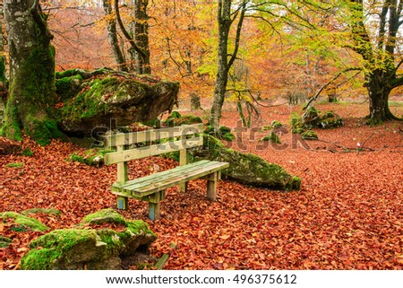lonely bench at autumn landscape
