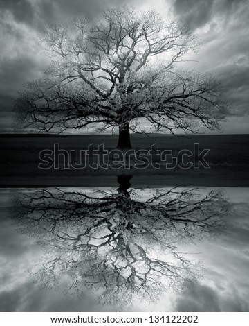 Lonely big tree with reflection,sky with dark clouds - stock photo