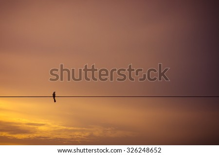 Lonely bird on electric wire silhouette against twilight clouds - stock photo