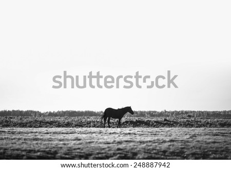 lonely black horse - stock photo