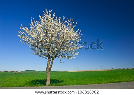 Lonely blooming apple tree in the green field with a blue sky - stock photo