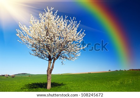 Lonely blooming apple tree in the green field with a blue sky, sun and rainbow - stock photo
