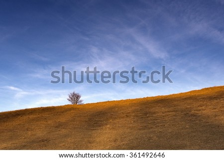 lonely bush on a background of blue sky and dry yellow grass, autumn