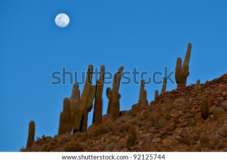 Lonely Cactus in the mountain desert and the shining moon