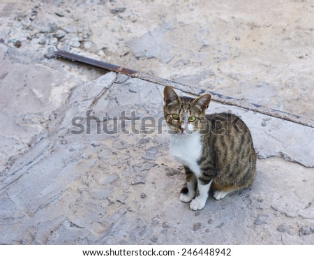 Lonely cat on the road - stock photo
