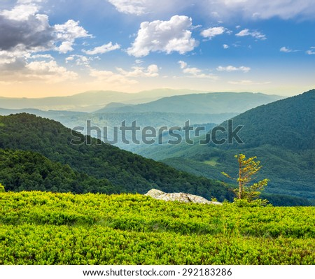 lonely conifer tree and stone on the edge of hillside with path in the grass on top of high mountain range in morning light - stock photo