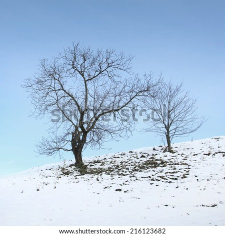 Lonely countryside winter trees background.