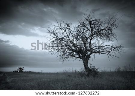 Lonely dead tree. Art nature. - stock photo